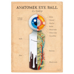 ANATOMIK EYE BALL / Le Cyklop